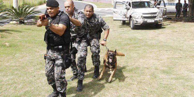 Treinamento de agentes do GAOp participam de treinamento para utilizarem cães nas diversas formas de abordagem na rua.Data 30/03/2016. Foto: João Barreto/Prefeitura de Macaé-RJ. Macaé/RJ/Brasil